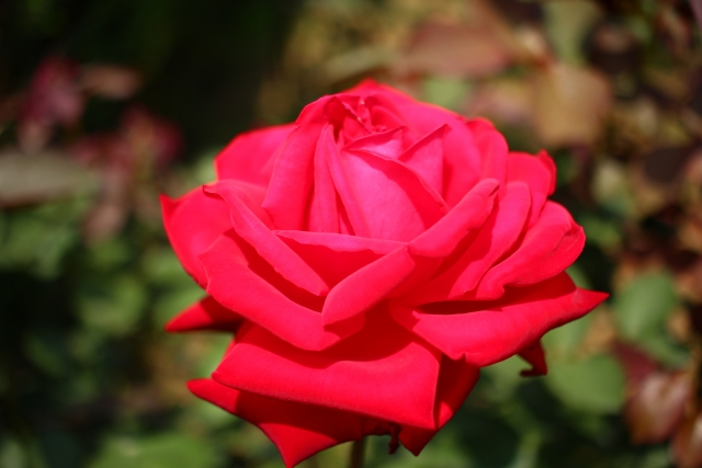 「高嶺の花」は英語で何という?